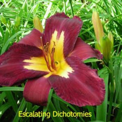 Escalating Dichotomies